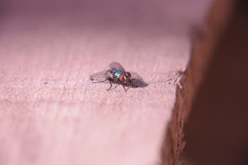He& x27; för s fluga så royaltyfria foton