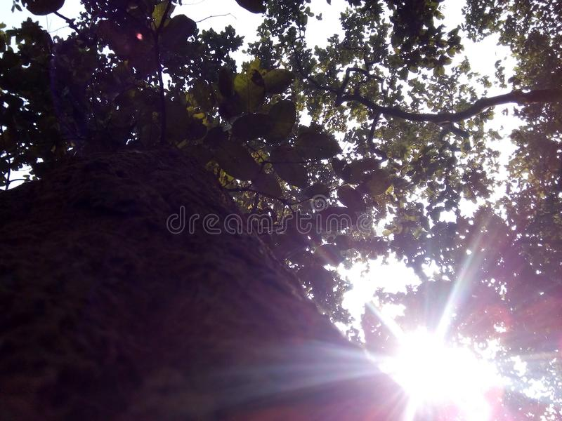 X luz solar fotos de stock royalty free