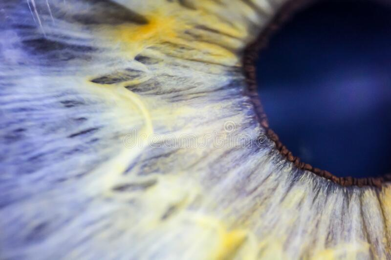 Extreme closeup of a macaw parrot bird eye royalty free stock image
