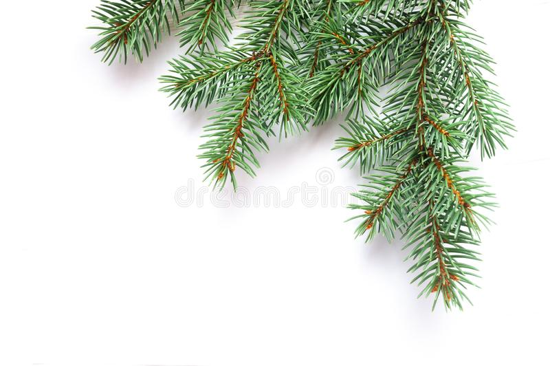X-mas fir tree branch isolated on white background. Pine branch. Christmas background royalty free stock photography