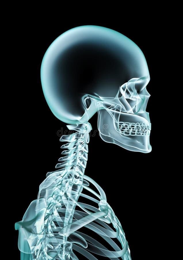 Download X-ray stock illustration. Image of xray, think, idea - 21492390