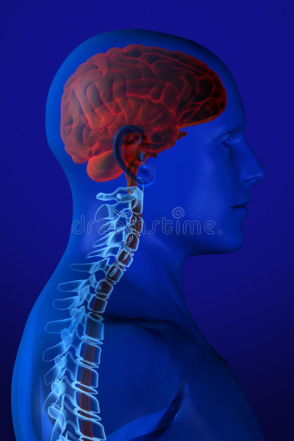 X-ray Anatomy on Blue stock illustration