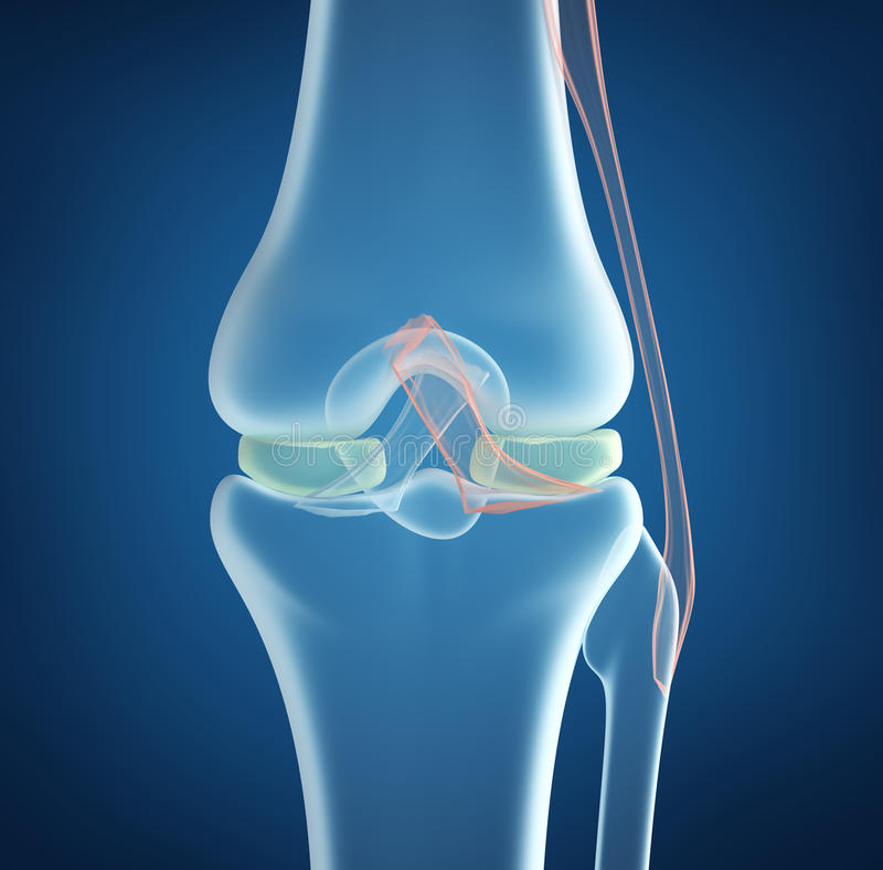 X-ray concept of knee joint closeup view. On blue background stock illustration