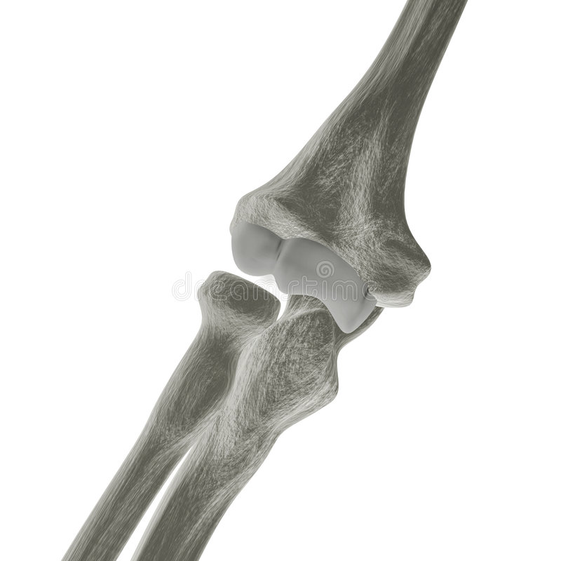 Download X-ray Elbow Bones stock illustration. Illustration of human - 3033595