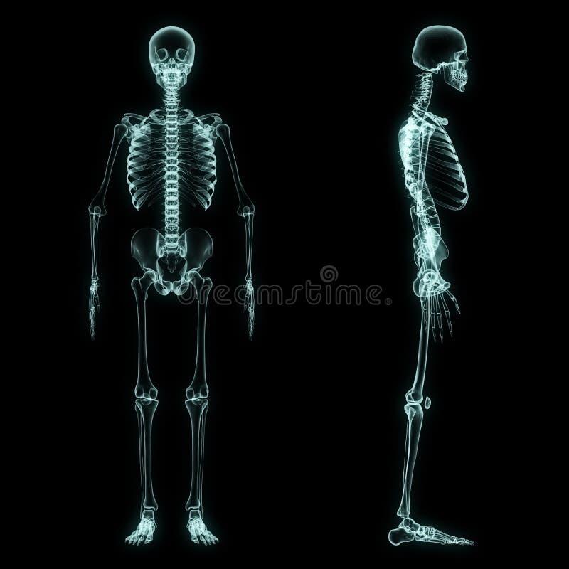 X-ray full body of skeleton. In brightness blue with black background vector illustration