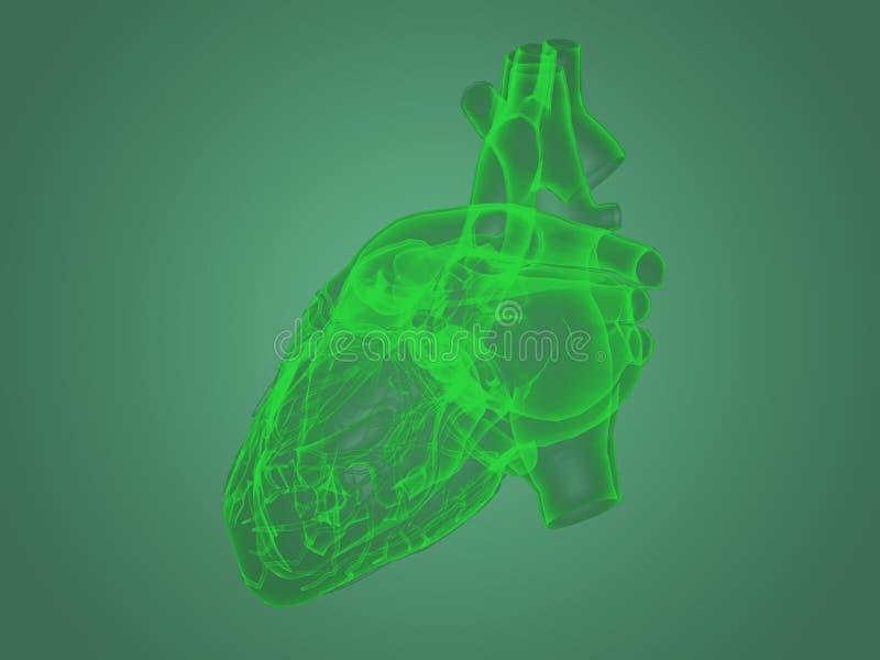 X-ray heart anatomy stock illustration. Illustration of healthcare ...