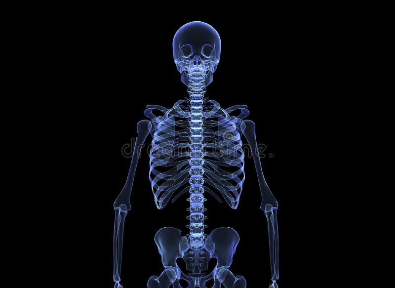 X-ray of the human body stock illustration
