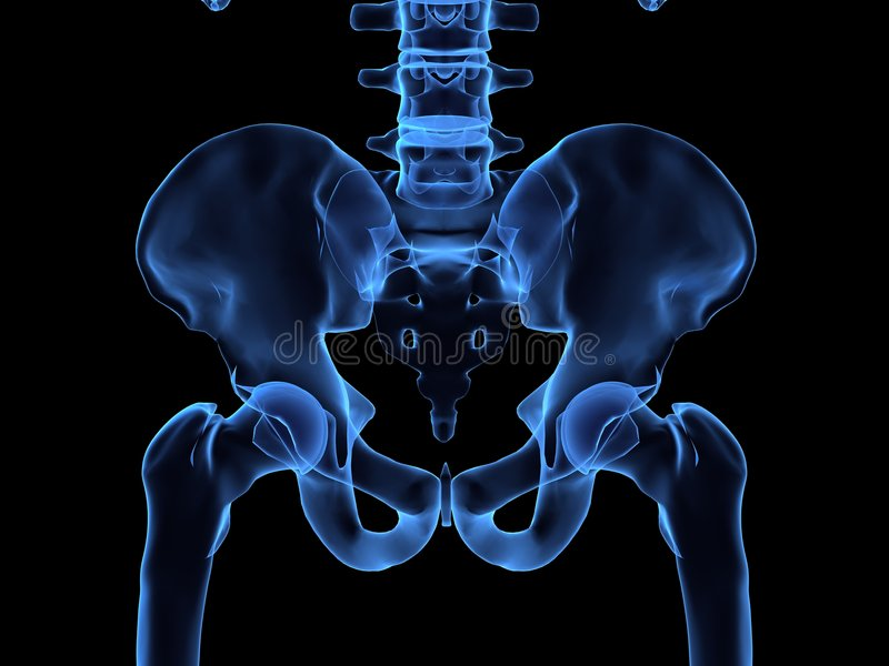 Download X-ray of a human hips stock illustration. Image of human - 2463490