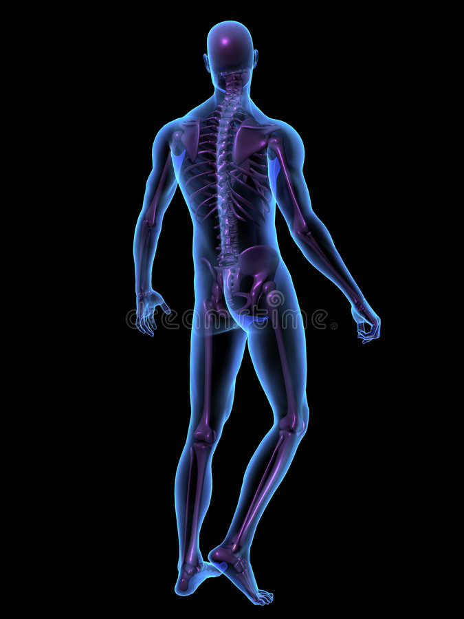 X-ray illustration male human body and skeleton vector illustration