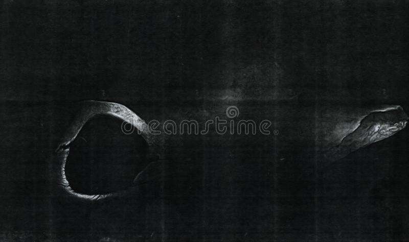 X Ray Image image libre de droits