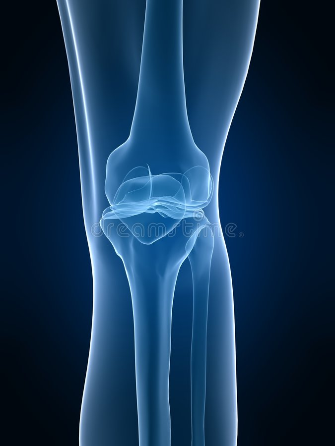 X-ray Knee Stock Images