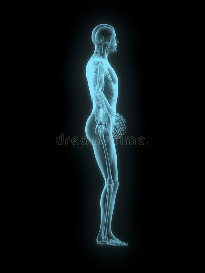 X-ray Of Man 3d Side View Blue Stock Images