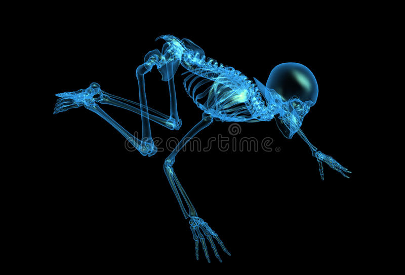 X-ray Skeleton Royalty Free Stock Image