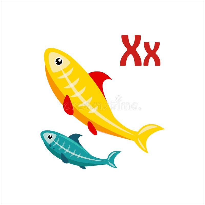X-Ray Tetra. Funny Alphabet, Animal Vector Illustration. X-Ray Tetra. Funny Alphabet, Colourful Animal Vector Illustration vector illustration