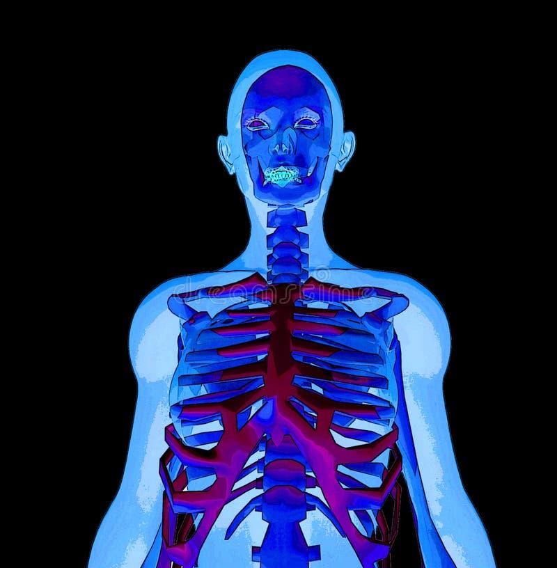 Download X rayo stock de ilustración. Ilustración de persona, hueso - 184860