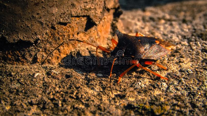 It& x27;s a bug! stock image