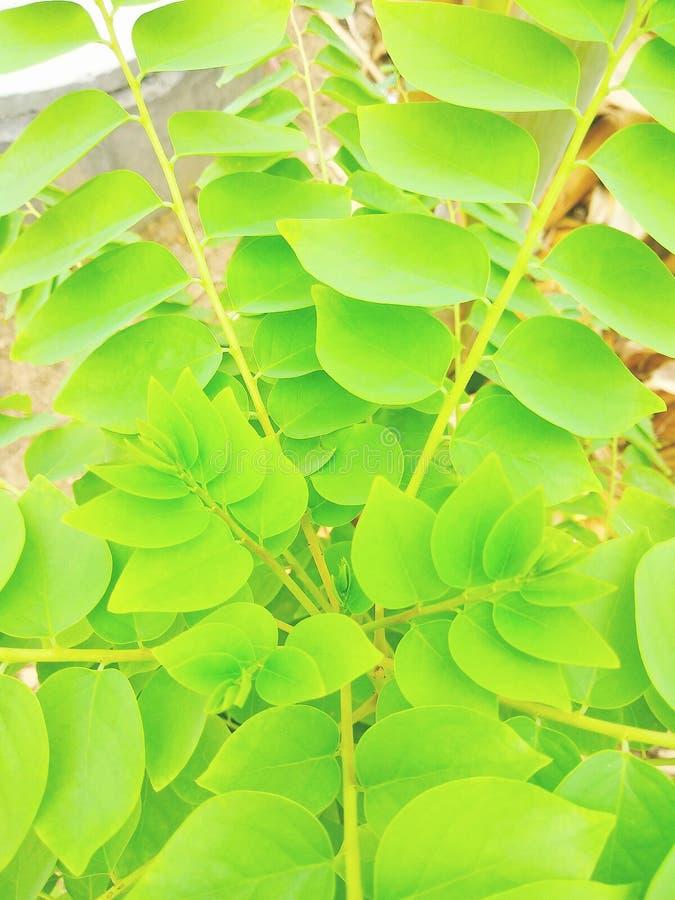 That& x27; s is een boom van zeer mooi en het blad in aardig royalty-vrije stock foto's