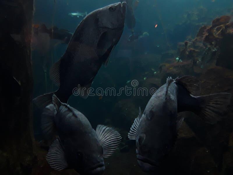 It& x27 ; s un monde de poisson de poissons là image libre de droits
