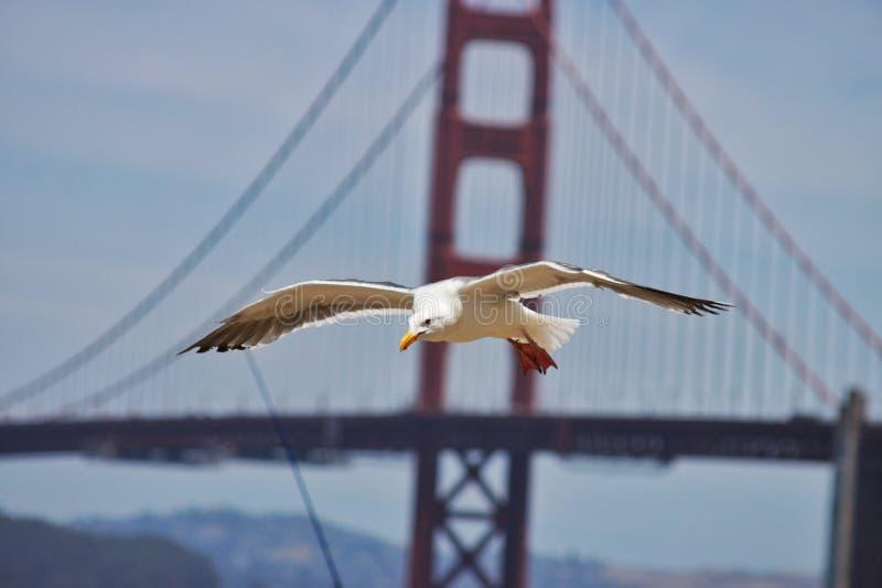 It& x27; s un vuelo de la gaviota de mi manera fotos de archivo