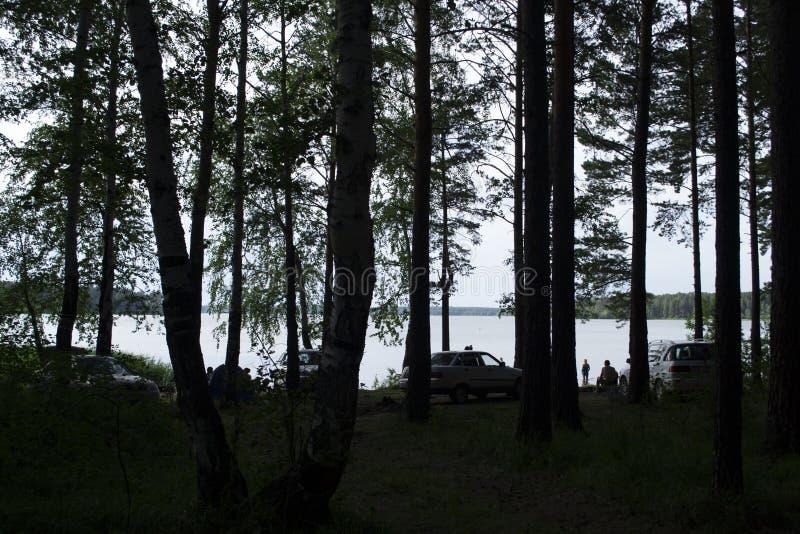 It' s zomer De mensen rusten in een pijnboombos op de rivierbank Ural, Rusland stock afbeeldingen