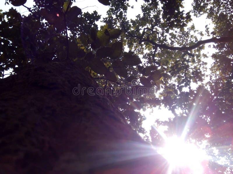 X Sonnenlicht lizenzfreie stockfotos