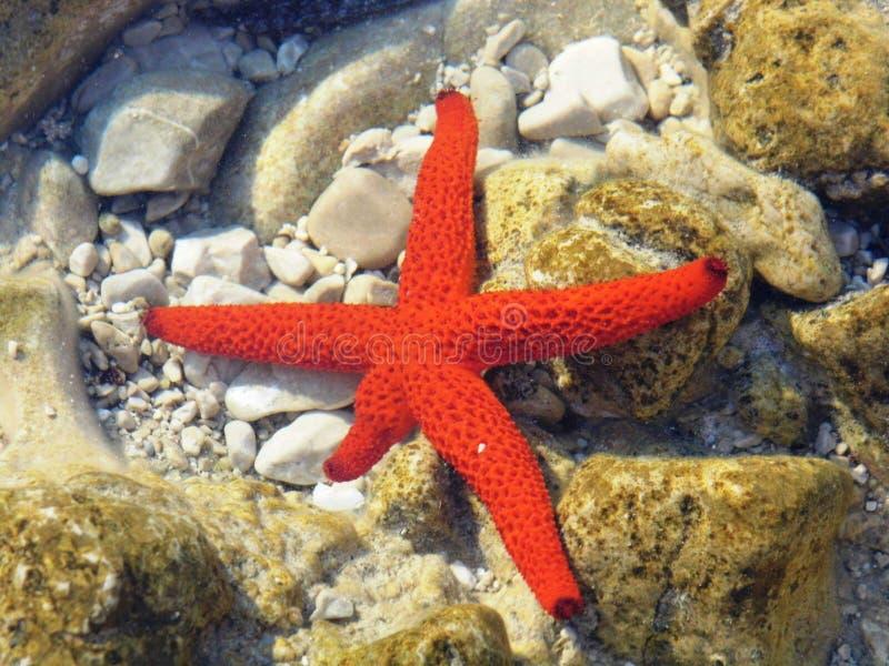 & x22 Star& x22  στην αδριατική θάλασσα στοκ φωτογραφίες με δικαίωμα ελεύθερης χρήσης