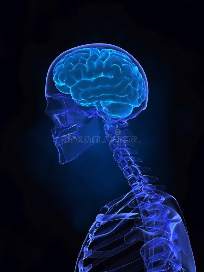 X- straal menselijke hersenen, pijn en skelet stock fotografie