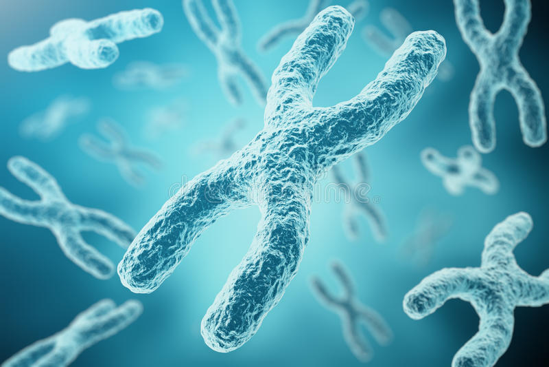 X - Y染色体作为人类生物学医疗标志基因治疗或微生物学遗传学研究的一个概念 3d 向量例证