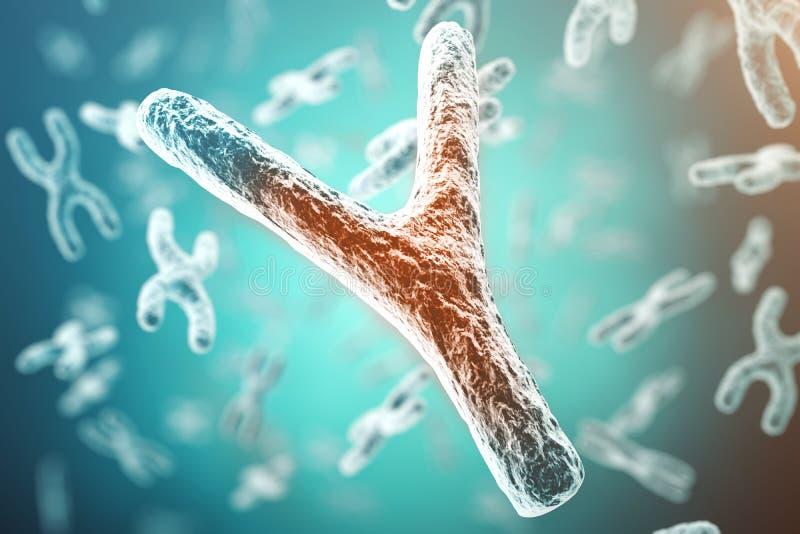 X-y-Chromosom, rot in der Mitte, Konzept der Infektion, Veränderung, Krankheit, mit Fokuseffekt Wiedergabe 3d stock abbildung