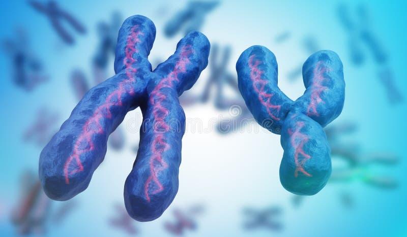 X and Y chromosomes. Genetics concept. 3D rendered illustration stock illustration