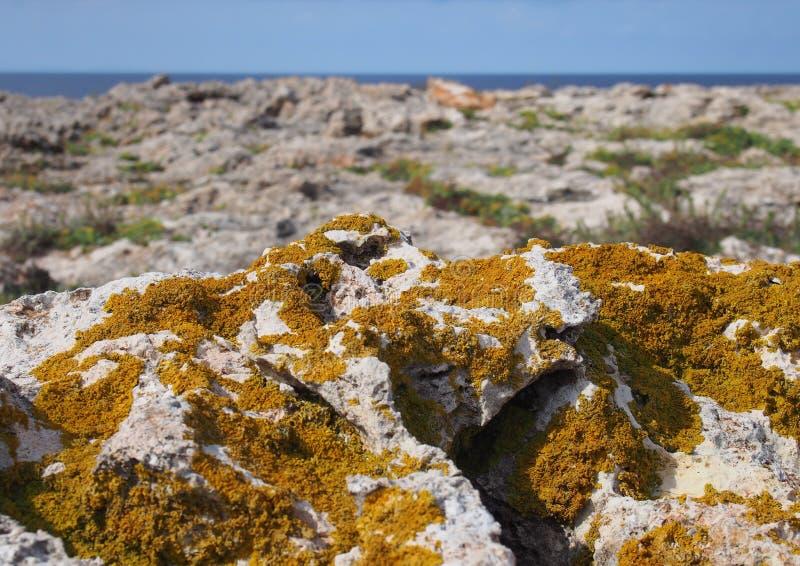 Xanthoria anaranjado un hongo lichenized que crece en roca de fondo costera de la piedra caliza con los acantilados y el mar en l imágenes de archivo libres de regalías