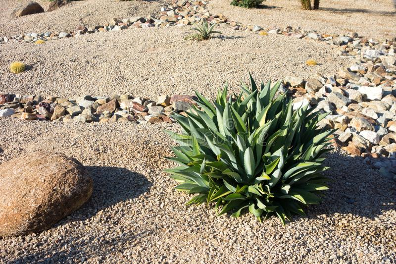 xeriscaping绿色口音的沙漠 图库摄影