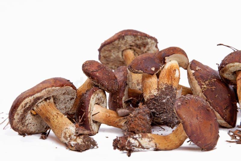 Download Xerocomus Badius Mushrooms Isolated On White Stock Photo - Image: 16420510
