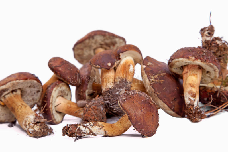 Download Xerocomus Badius Mushrooms Isolated On White Stock Image - Image of meal, cooking: 16420569
