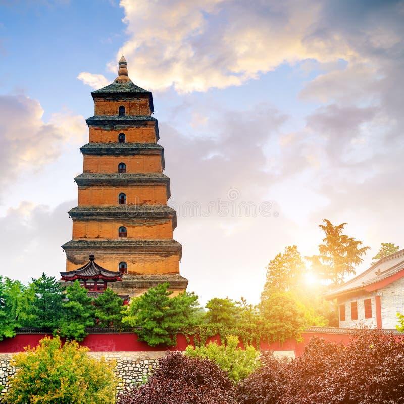 ` Xi um pagode selvagem do ganso imagem de stock