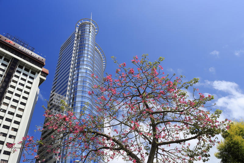 The xiamen international bank building. Amoy city, china. and the roadside chorisia blossom stock images