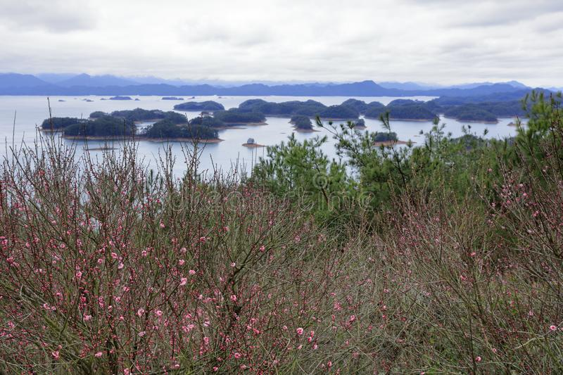 Plum blossom by the Thousand Island Lake in cloudy day, adobe rgb. Xin`anjiang Reservoir is located in Chun`an County, Hangzhou City, Zhejiang Province. Built in stock photography