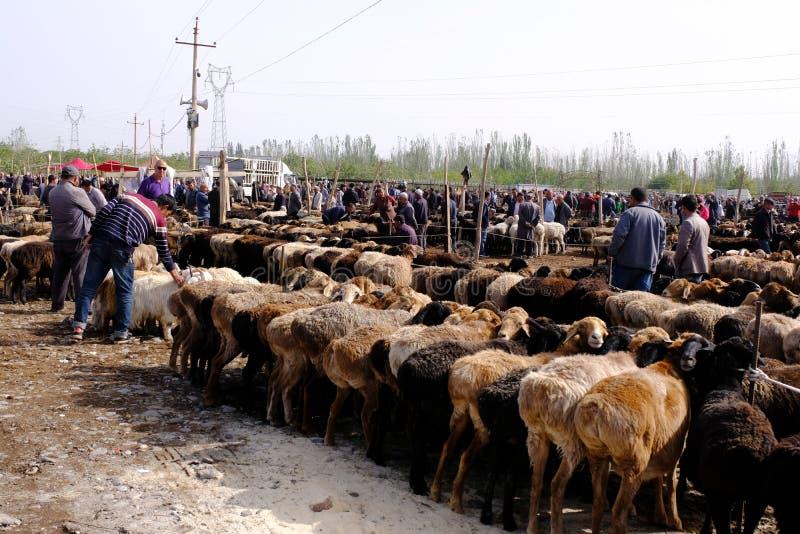 Xinjiang China - 16 de setembro de 2018: Um estilo de vida local dos povos de Xinjiang Uyghur da mostra da imagem Troca animal tr imagem de stock