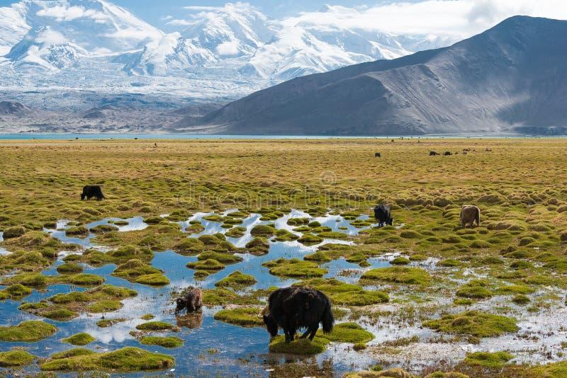 XINJIANG CHINY, Maj, - 21 2015: Karakul jezioro sławny krajobraz fotografia stock