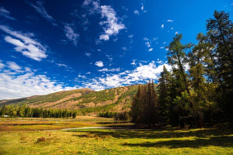 Xinjiang Kanas Lake scenery royalty free stock photos