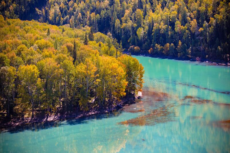 Xinjiang kanas scenery area moon bay autumn. The emerald river reflects the golden forest on its Banks royalty free stock photos