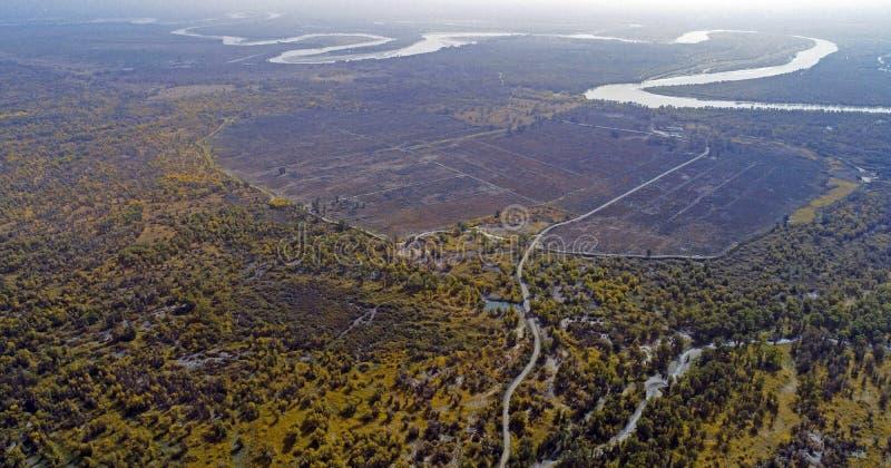 Xinjiang: Unterlassung der Wälder Populus euphratica Waldes stockbilder