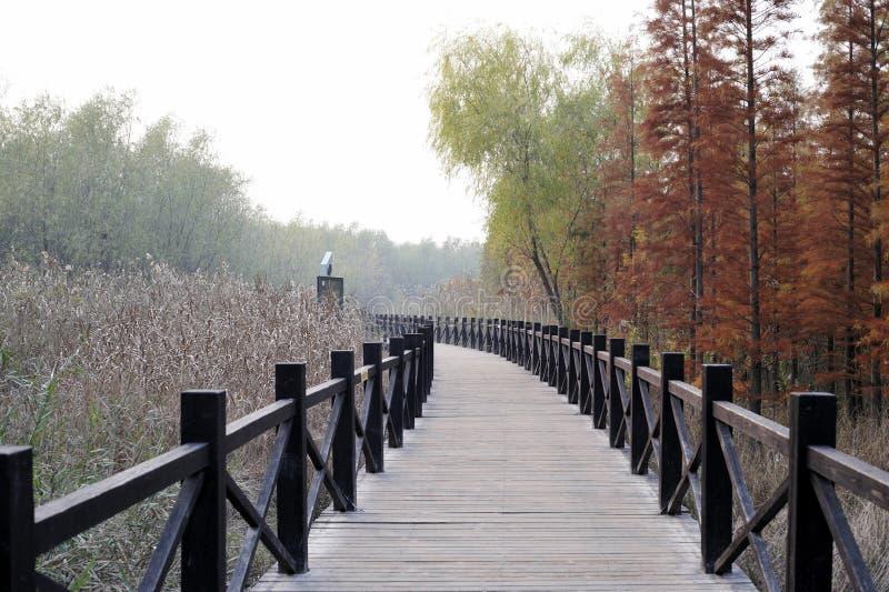 Xisha wetland in Chongming island stock images