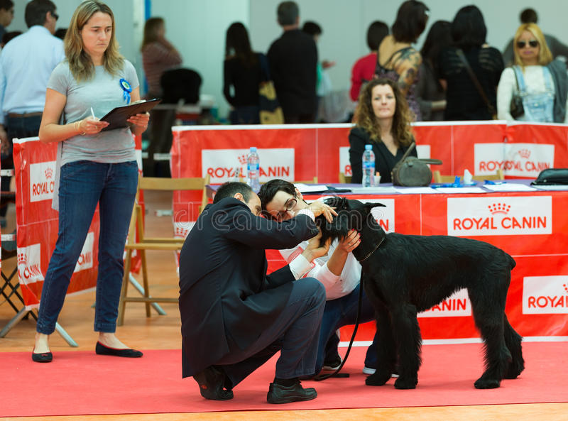 XIX nationale hondtentoonstelling van Catalonië royalty-vrije stock fotografie