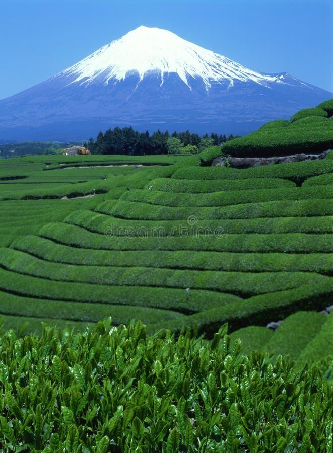xlix góry fuji obraz royalty free