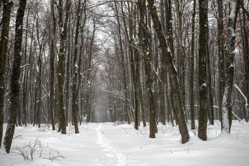 Xmas有暴风雪和小径的冬天森林 免版税库存照片