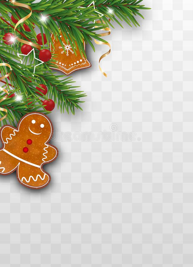 Xmas decoration of Christmas tree branches with gingerbread cookies, holly berries and golden ribbons on transparent background. Vector illustration vector illustration