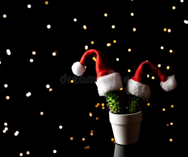 Xmas Decoration Green cactus in Santa Claus hat on Christmas lights background. Happy New Year festive celebration. New year, Xmas decoration isolated on linen stock photo