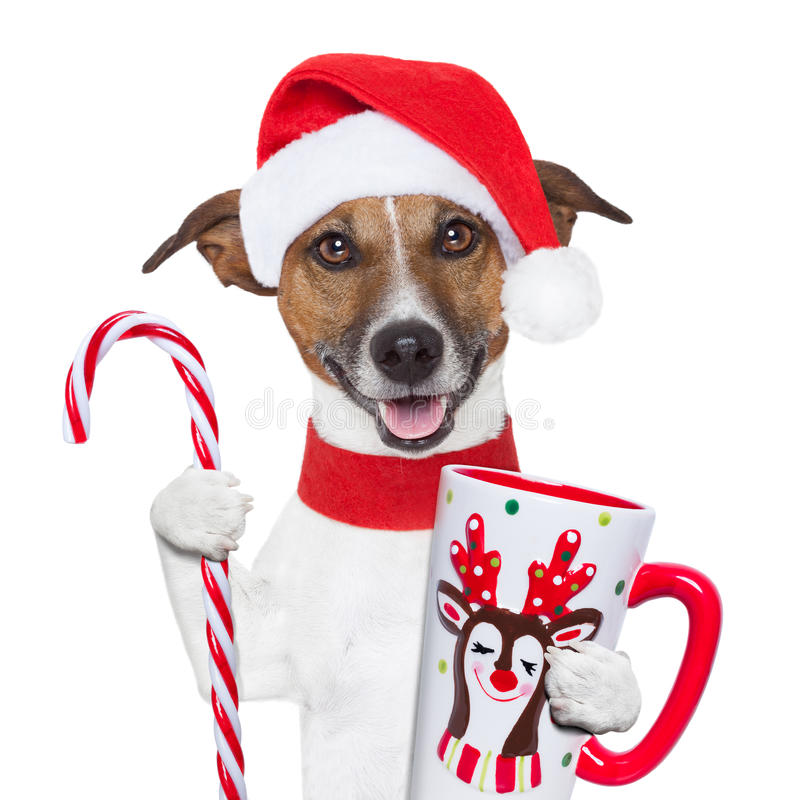 Xmas dog with cup and candy cane. Santa claus dog with sugar cane and cup royalty free stock image