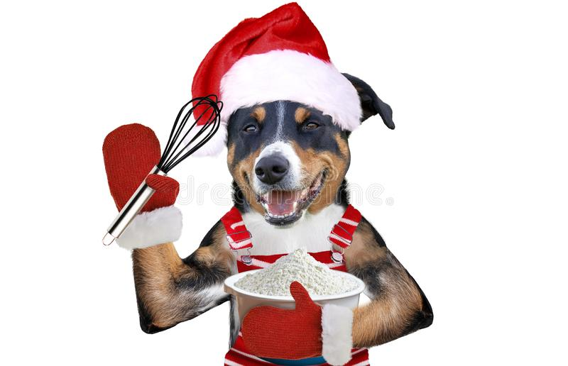 Xmas dog in Santa´s dress holding a wire whisk royalty free stock photo